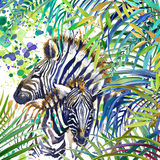 Tropical exotic forest, Zebra family, green leaves, wildlife, watercolor illustration.fe, watercolor illustration. Stock Image