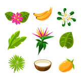 Tropical Exotic Fruits And Flora Set Of Icons. Tropical Plants And Fruits Set In Simple Realistic Cartoon Flat Vector Design  On White Background Royalty Free Stock Photos
