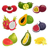 Tropical and exotic fruits  icons Royalty Free Stock Photo