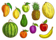 Tropical and exotic fruits set royalty free illustration