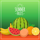 Tropical exotic fruits. Summer foods background design. Eps 10 vector illustration Stock Photos