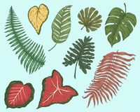 Tropical or exotic leaves, leaf of different vintage looking plants. monstera and fern, palm with banana botany set. Flowers engraved vintage, hand drawn vector illustration