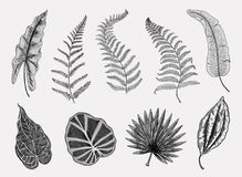 Tropical or exotic leaves, leaf of different vintage looking plants. monstera and fern, palm with banana botany set. Flowers engraved vintage, hand drawn Royalty Free Stock Photo