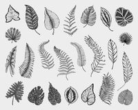 Tropical or exotic leaves, leaf of different vintage looking plants. monstera and fern, palm with banana botany set. Flowers engraved vintage, hand drawn Stock Images
