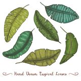 Tropical or exotic leaves, leaf of different vintage looking plants. monstera and fern, palm with banana botany set. Flowers engraved vintage, hand drawn royalty free illustration