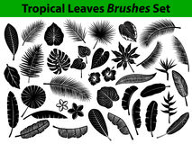 Tropical Exotic Leaves Silhouette Collection With Some Flowers In Black Color Stock Photo