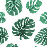 Tropical exotic monstera leaves seamless pattern Stock Photo