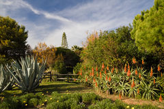Tropical exotic park with cactus aloe vera and trees in blue sky, algarve, south portugal royalty free stock photography