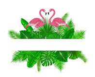 Tropical exotic plants with pink flamingos card template Stock Photos