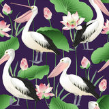 Tropical exotic print with pelicans, lotus flowers and leaves. Tropical exotic print with pelicans - Vector Image. Watercolor Stock Photos