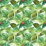 Tropical exotic seamless pattern. Natural background. Tropical exotic plants, green leaves, branches and pink flowers on white background. Watercolor hand drawn Stock Photography
