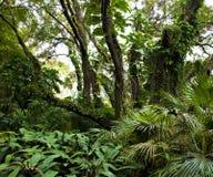 Tropical Fairyland Royalty Free Stock Photo