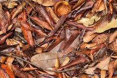 Tropical fallen leaves Stock Photography