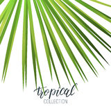 Tropical fan palm leaf and calligraphy. Summer banner design layout Royalty Free Stock Photos