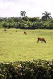 Tropical Farmland Royalty Free Stock Image