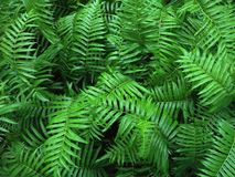 Tropical Fern Bushes green season. stock photos