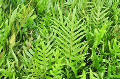 Tropical fern Royalty Free Stock Photos