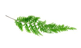 Tropical fern leaf Stock Photo