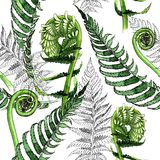Tropical fern leaves pattern in a watercolor style. Royalty Free Stock Image
