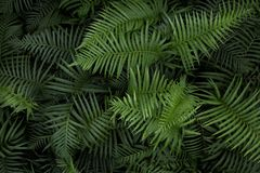 Tropical fern leaves,. Jungle leaves green pattern background royalty free stock photos