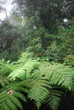 Tropical fern tree Stock Photo