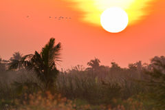 Tropical field in sunset Royalty Free Stock Photography