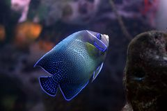 Tropical fish №23 Stock Photo