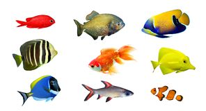 Tropical fish. Collection on white background Stock Photos