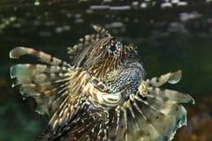 Tropical fish. At the aquarium in Scheveningen, Holland Stock Image