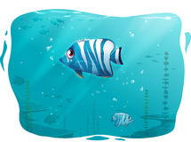 Tropical Fish vector illustration