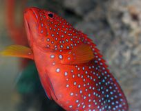 Tropical Fish. Salted Water Colorful Tropical Fish Royalty Free Stock Photo