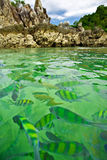 Tropical fish. In crystal green water of Asian Island Royalty Free Stock Photography