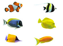 Free Tropical Fish Stock Photo - 15011130