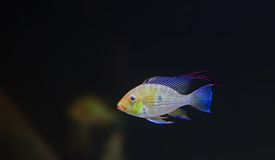 Tropical fish Stock Photos