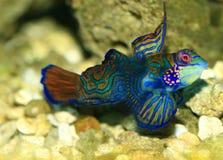 Tropical Fish. Salt water colorfull tropical fish Royalty Free Stock Image