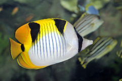 Free Tropical Fish Stock Photography - 16322842