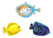 Tropical Fish. Illustrations isolated on white background Royalty Free Stock Images