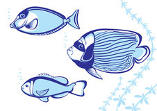 Free Tropical Fish Royalty Free Stock Photo - 18418745