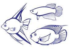 Free Tropical Fish Stock Photo - 18479690