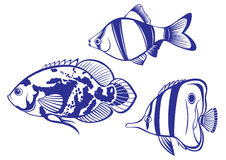 Free Tropical Fish Royalty Free Stock Photography - 18479697