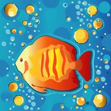 Tropical Fish. Bright tropical fish underwater with bubbles Royalty Free Stock Photography