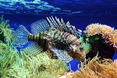 Tropical fish Stock Image