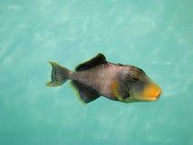 Tropical fish. A tropical fish close up Stock Photo