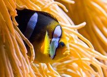 Tropical fish Stock Photos