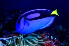 Tropical fish. In their natural habitat Stock Image