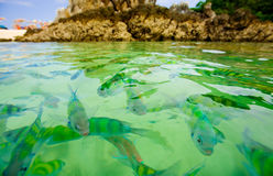 Tropical fish. Colorful tropical fish in ocean near beach in Thailand Royalty Free Stock Photo