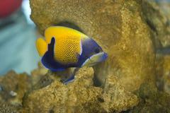 Tropical fish. Beautiful salt water tropical fish Royalty Free Stock Photos