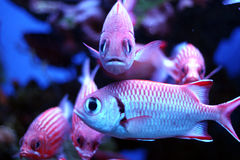 Tropical fish. In hawaii Royalty Free Stock Photos