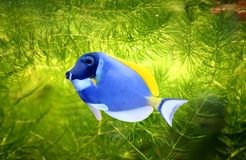 Tropical fish. A colourful tropical fish on water Stock Image