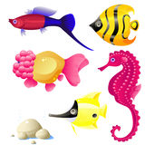 Tropical fish. Set of tropical fish, stones, bubbles, vector, isolated on white, eps 8 format Stock Photography